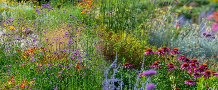 Beispiel #2 für das Performance-Advertorial zur Lead-Generierung: Gartenstauden. (Foto: shutterstock Kuttelvaserova StuchelovaI)